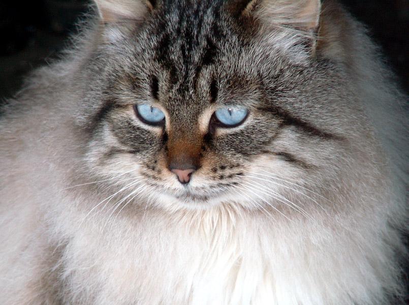 Кота-фоты