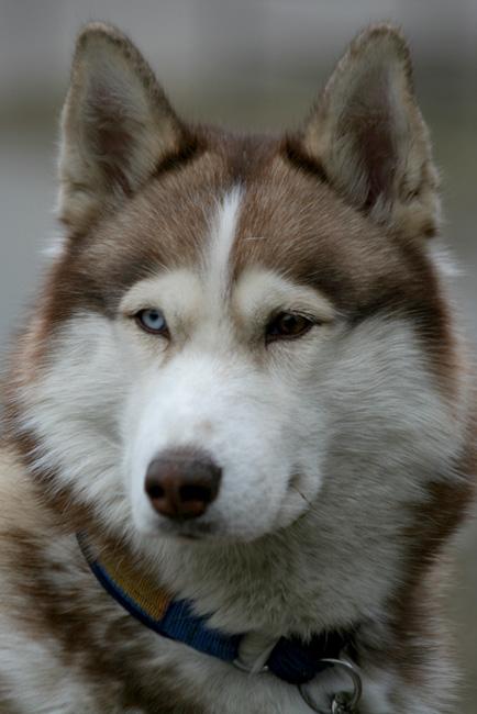 По легенде, разные глаза были у Тристана - один золотой, другой - синий.